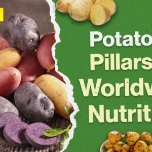 Potatoes - A Miracle Of Nutrition?